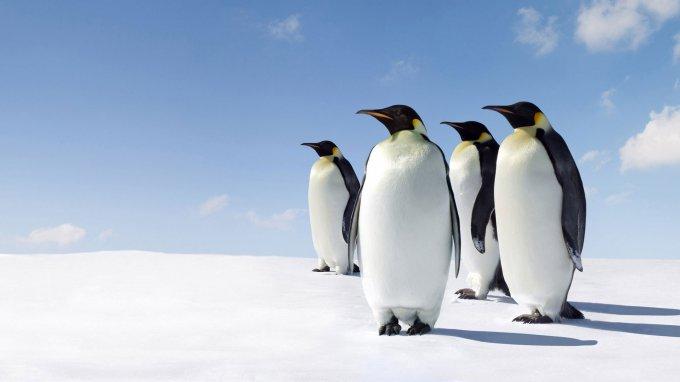 Оперный певец распугал пингвинов в Антарктиде. Видео