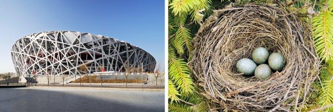 Величайшие образцы архитектуры, созданные по образу природы. Фото