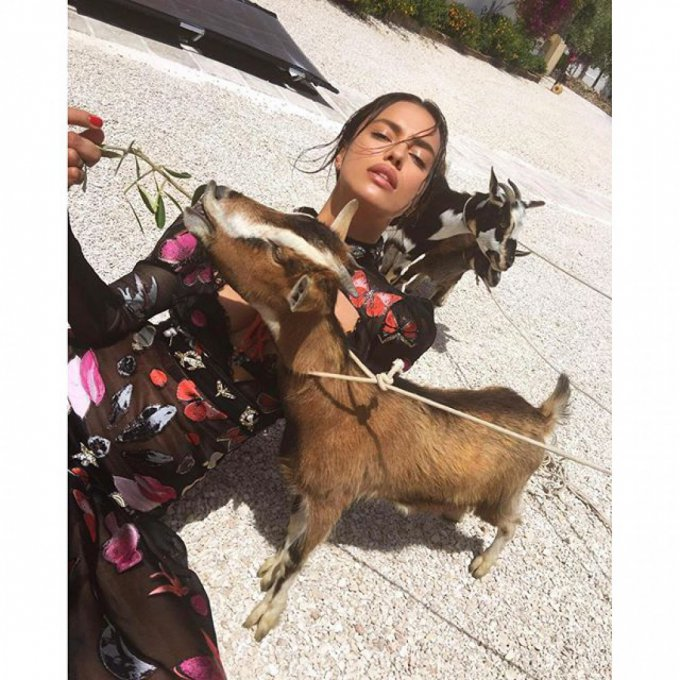 Ирина Шейк поделилась необычным фото с домашними козами