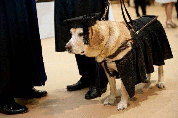 животные получили настоящие дипломы Фото Эти животные получили настоящие дипломы Фото