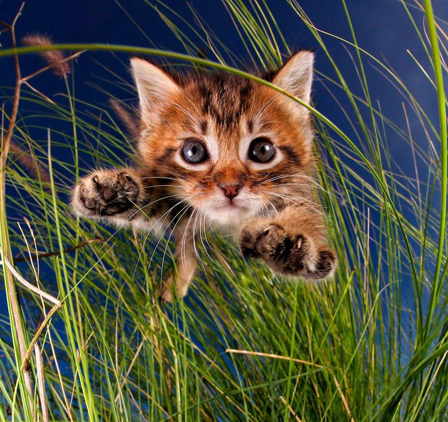 Картинки приколы котов котят