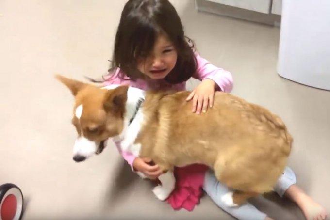 Собака-психотерапевт стала новой звездой Сети. Видео