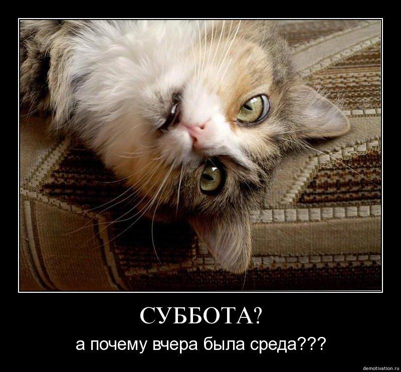 демотиваторы коты в субботу подземным
