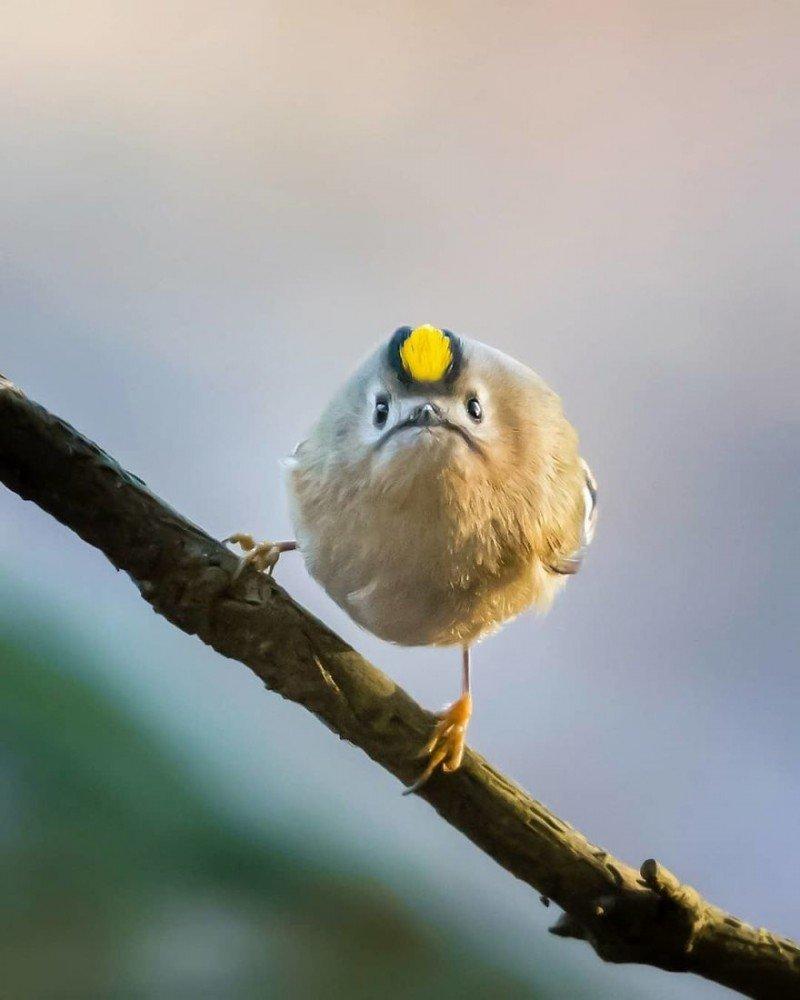 Птицы в смешных картинках