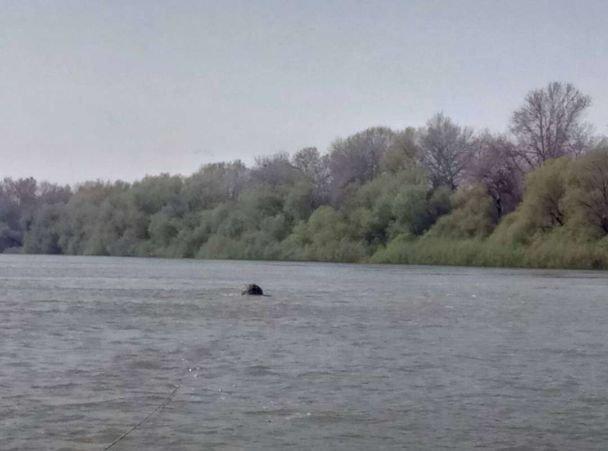На Дунае всплыли пять противолодочных мин