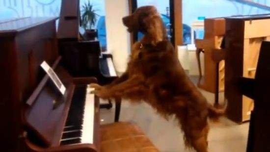 Мережа в захваті від блюзу в виконанні собаки